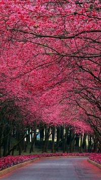 Sakura Art Wallpaper screenshot 8