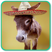 Donkey Wallpapers HD icon