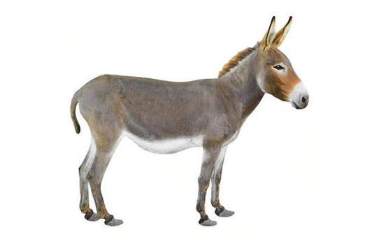 Donkey Wallpapers HD screenshot 5