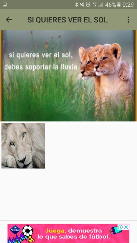 Leones Tiernos For Android Apk Download