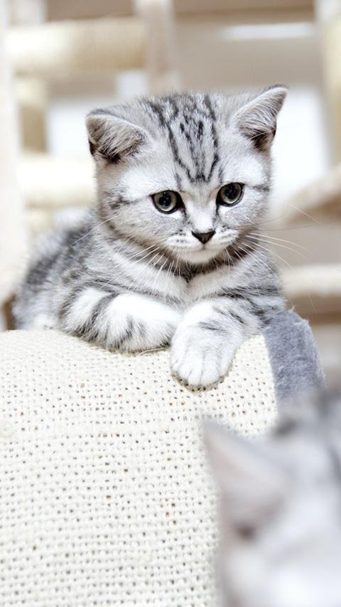 Cute Cat Wallpapers Hd Free For Android Apk Download