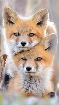 Fox Wallpapers Hd Free Apk App Descarga Gratis Para Android