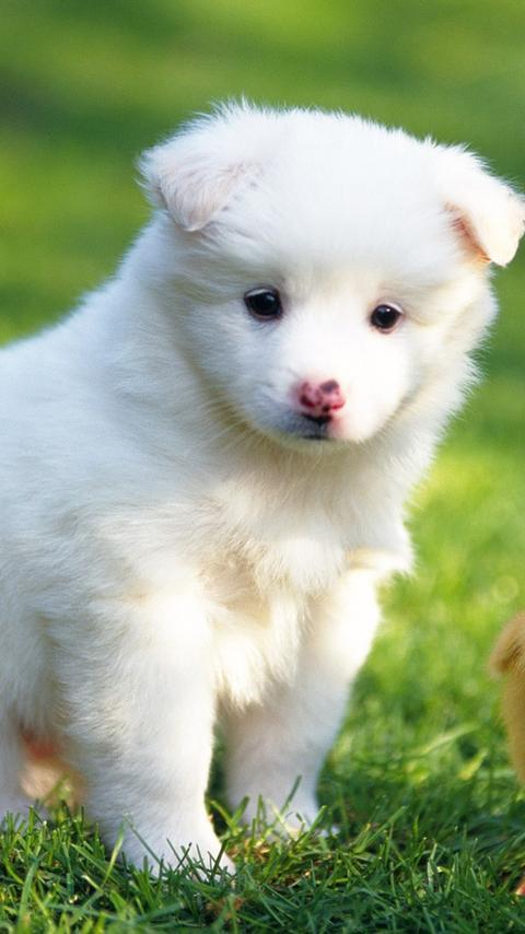 Cute Puppy Wallpapers Hd Free For Android Apk Download