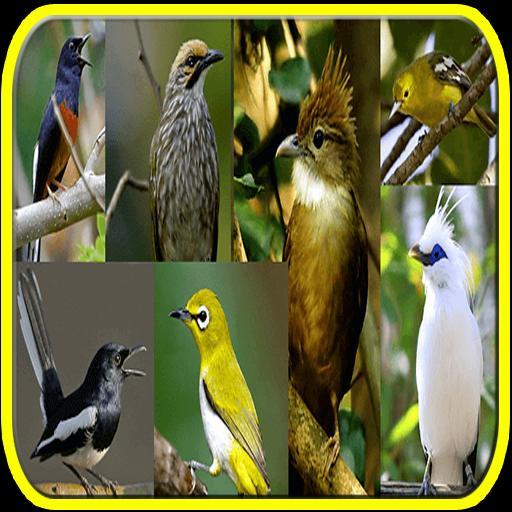 Mp3 Kicau Burung Se Indonesia For Android Apk Download