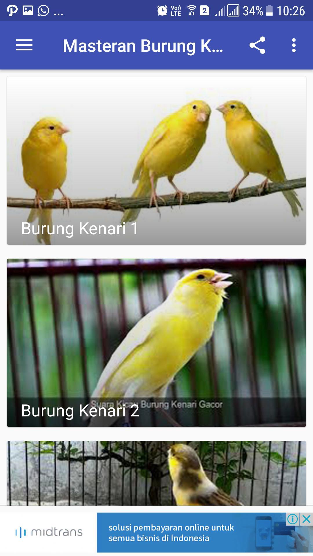 Masteran Burung Kenari For Android Apk Download