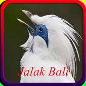 Master Kicau Jalak Bali Offline icon
