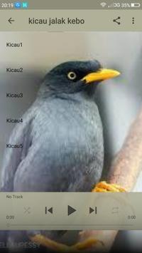 Master Kicau Jalak Kebo poster