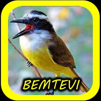 Canto de Bem-Te-Vi screenshot 2