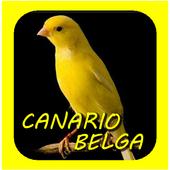 Canto De Canario Belga icon