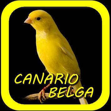 Canto De Canario Belga poster