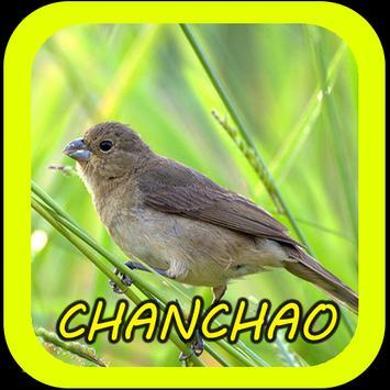 Canto de Chanchão screenshot 2