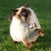 Funny Cat Pictures icon