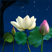 Lotus Pond Live Wallpaper icon
