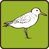 Sanderling icon