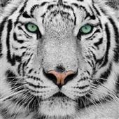 Animals Wallpaper icon