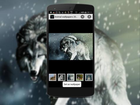 Animal Wallpapers 2016 apk screenshot