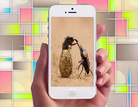 Awesome Animal Photography 1 apk screenshot
