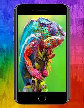Animal HD Wallpapers poster