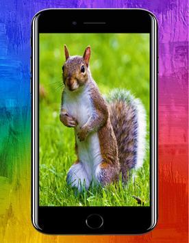 Animal HD Wallpapers apk screenshot