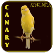 Canary Bird Singing icon