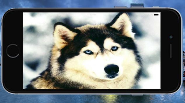 Animals screenshot 2