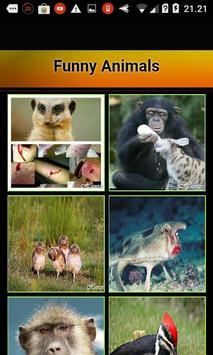 Funny Animals poster