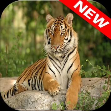 Tiger Wallpapers apk screenshot