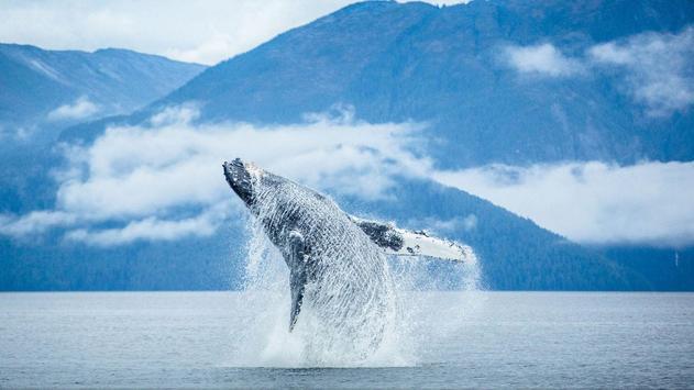 Whale Wallpapers apk screenshot