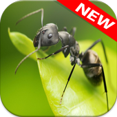 Ant Wallpapers icon