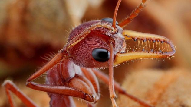 Ant Wallpapers apk screenshot