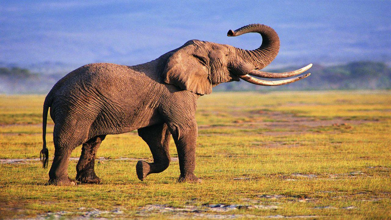 Elephant Wallpapers For Android Apk Download