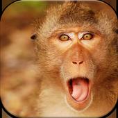 Monkey Wallpapers icon
