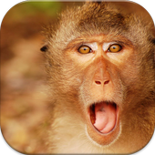 Monkey Wallpapers icon