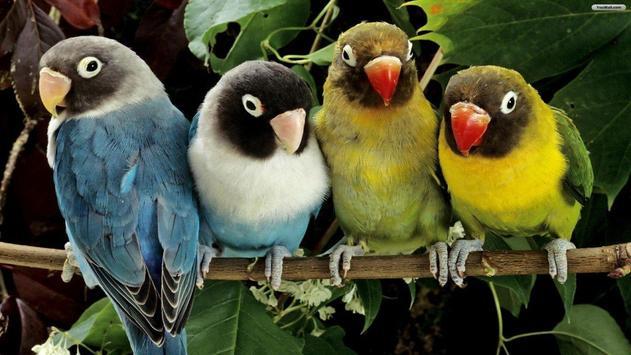Parrot Wallpapers apk screenshot