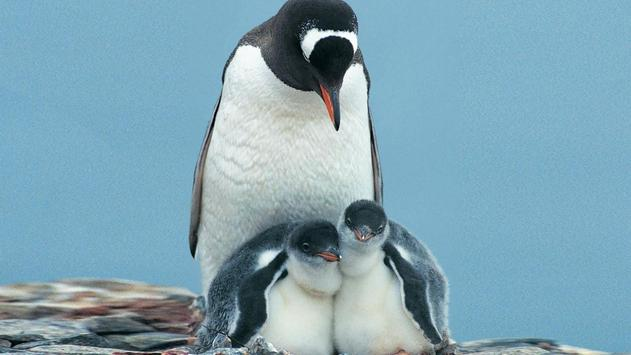 Penguin Wallpapers poster