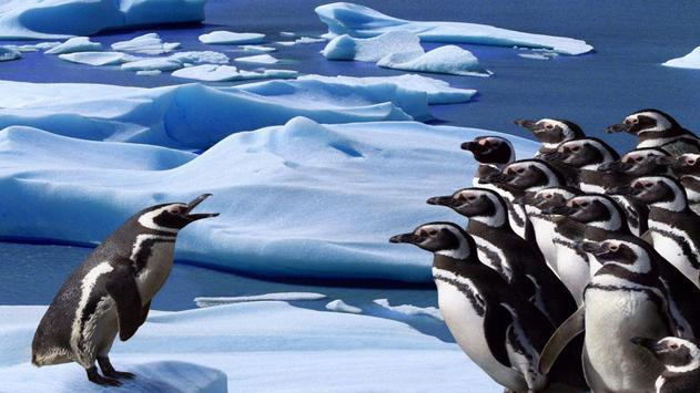 Penguin Wallpapers apk screenshot