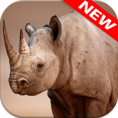 Rhino Wallpapers icon