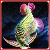 Arowana Fish Animation icon