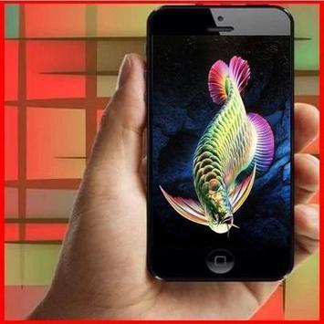 Arowana Fish Animation apk screenshot