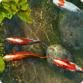 Koi Fish 1 live wallpaper icon