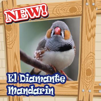 Canto del diamante mandarin Mp3 poster