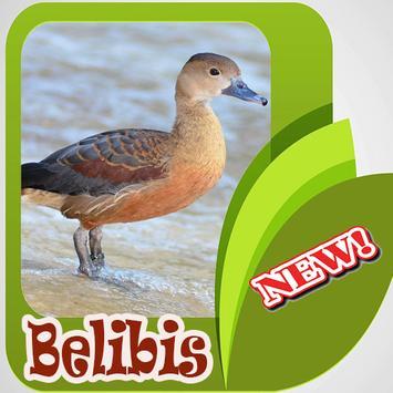 Kicau Burung Belibis Terbaik Mp3 poster