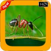 New Ant Photo Frames icon