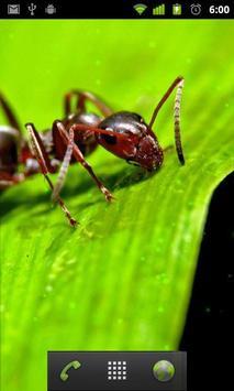 ants live wallpaper screenshot 1