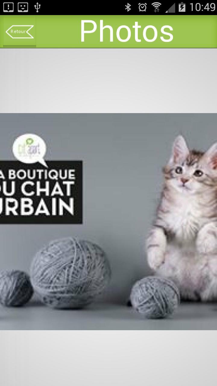 La Boutique du Chat Urbain poster