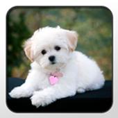 Poodle Theme - Nova/ADW/GO icon
