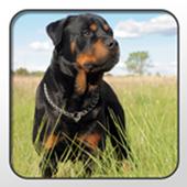 Rottweiler Theme - Nova/ADW/GO icon