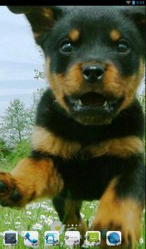 Rottweiler Theme - Nova/ADW/GO apk screenshot