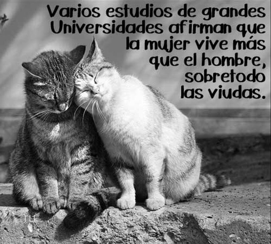 Imágenes Frases Bonitas De Amor Reflexión Gatitos For Android Apk