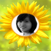 Photo In Sunflower frames icon